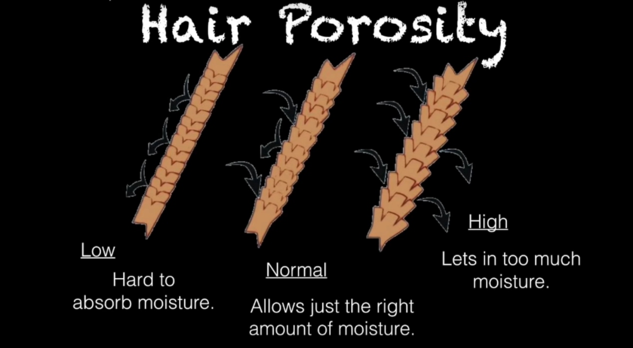 hair porosity.png